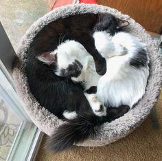 Yin and Yang http://ift.tt/2kiv2qH