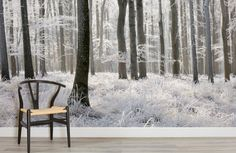winter-frost-forest-forest-room