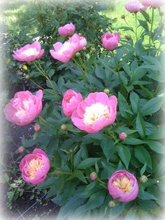 """2 Bags Full - My adventures in travel, knitting, and the blessings of my every day life.: """"Ode to the Gardener"""" -- (Spring scenes from our home)"""