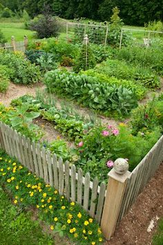 Potager with picket fence
