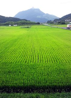 Yufuin rice fields, Japan