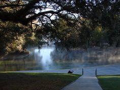 Good morning, Wekiwa Springs! Photo by Robert Westover