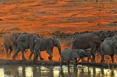 Jay Berkley More Dusty Elephants  Another shot of elephants coming for a dusty drink at sunrise, Kilaguni, Tsavo West, Kenya