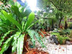 My backyard garden. 05-12-2014.