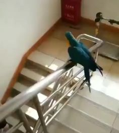 Parrot goes down on the rails [GIF] Funny Birds, Cute Birds, Cute Funny Animals, Cute Baby Animals, Bird Pictures, Funny Animal Pictures, Hilarious Pictures, Funny Parrots, Animal Antics
