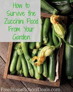 Ways to Use Zucchini