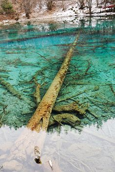 Fossilized Trees in Five Flower Lake, Jiuzhaigou Valley National Park, China