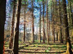 Pecknell Woods Barnard Castle  #wildcamping #camping #outdoors #hiking #adventure #microadventure #bushcraft #keefusoutdoors #trekking #nature #photography #backpacking #uk #countryside #england #countydurham #woodland #mountains #landscape #tgo #barnardcastle #trailmagazine #gooutdoors