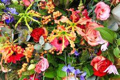 Bloembinders - Producten - Kleurrijk Plants, Plant, Planets