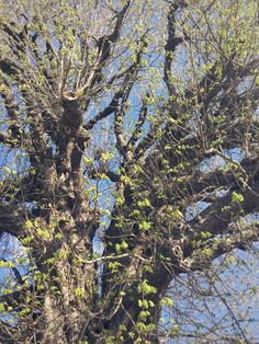 to the chestnut tree – Poem | Wild Library Tree Poem, Kids Climbing, A Hundred Years, Chestnut Horse, Poems, Earth, Clouds, Instagram, Poetry