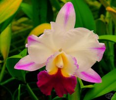 Hybrid Orchid  Shot with a Canon T2i Rebel @ Maui Botanical Gardens, March 29, 2012  #flower #garden #maui #hawaii #orchid