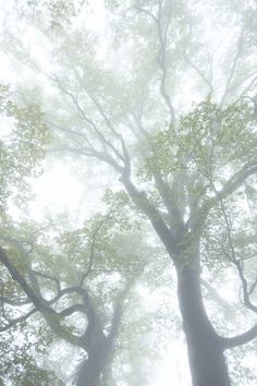 Healing ~ Nature - Look at the trees.how still they are, how deeply rooted in Being. Allow nature to teach you stillness. Natsume Yuujinchou, Eckhart Tolle, Tree Forest, Mother Earth, The Magicians, Beautiful World, The Great Outdoors, Mists, The Dreamers