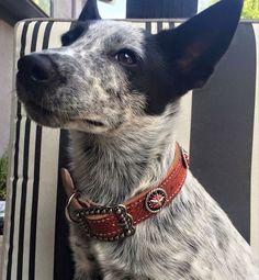 Custom dog collar for a customer! | Heart Of Golde Custom Leather