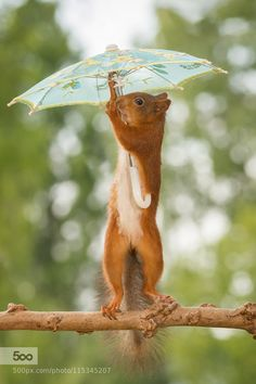 just stopped raining by geertweggen. Please Like http://fb.me/go4photos and Follow @go4fotos Thank You. :-)