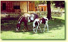 Bonner Painted Horse Bed & Breakfast. Two bedroom cottage, 5 miles from downtown Kerrville, on a paint horse ranch along Bear Creek.  Kitchen, satellite TV.  A nature lovers dream.  No smoking or pets.