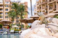 An amazing deal for the ultimate vacation to Nuevo Vallarta, this deal won't last long, so book the ultimate vacation now! Family Resorts, All Inclusive Resorts, Beach Resorts, Riviera Nayarit, Flamingo Beach, Mexico Resorts, Destin Beach, Fauna, A 17