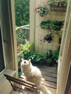 Amusing & Safe Balcony Decoration Ideas For Cats - Unique Balcony & Garden Decoration and Easy DIY Ideas Crazy Cat Lady, Crazy Cats, Animals And Pets, Cute Animals, Dream Apartment, Single Girl Apartment, Cozy Apartment Decor, Loft Apartment Decorating, Aesthetic Rooms