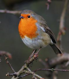 Robin 22 by Lewis Outing on 500px