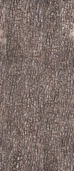 Bark Texture 1 by ~AGF81 on deviantART