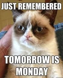 I just remembered. Tomorrow is Monday Grumpy Kitty, Grumpy Baby, Grump Cat, Funny Memes, Funny Quotes, Hilarious Jokes, Funniest Quotes, Funny Stuff, Hilarious Pictures