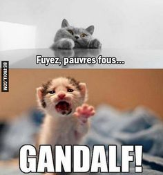 Fuyez, pauvres fous… Check more at gag.biz - My Ideas Kittens Cutest, Cats And Kittens, Cute Cats, Funny Kids, Funny Cute, Hilarious, Funny Images, Funny Pictures, Rage