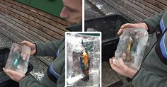 Amazing Discovery- A Priest Found Kingfishers Perfectly Preserved In Ice After Plunging Into A Pond To Catch Fish http://savingzev.1ovirality.us/client/eVVWe/bW7Yx/erkNW/lp5AV?utm_campaign=crowdfire&utm_content=crowdfire&utm_medium=social&utm_source=pinterest