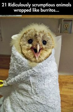 21 ADORABLE ANIMALS WRAPPED LIKE BURRITOS The flying foxes!!!!!!
