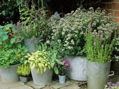 Container Herb Garden Small Space Gardening, Small Gardens, Outdoor Gardens,  Formal Gardens,