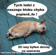 101 Żarty O Koronawirusie Funny Memes, Lol, Animals, Smile, Amazing, Board, Jokes, Humor, Funny Pics