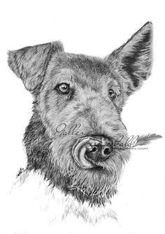 Airedale Terrier in Grafit auf 210 x 297 mm