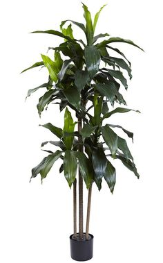 The Dracaena Indoor Outdoor Artificial Silk Tree with Planter will make a warm and welcoming addition to your home or office. Arrives in a plastic, non-decorative nursery pot. We recommend placing the