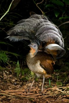 beautiful bird in regenwald