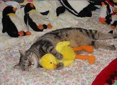 El 'IKEA-hack' más loco: camas de juguete para que los gatos duerman (FOTOS)