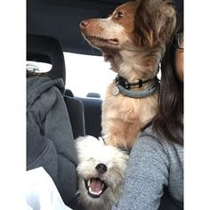This pair of pals who make the best road trip companions. | 19 Magnificent Mutts You'll Wish Were Yours