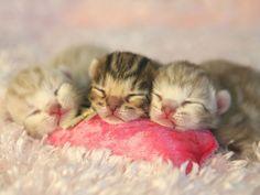 Bengal-Katzenbabys: Tierisch süß und wild gemustert - Seite 6