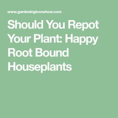 Should You Repot Your Plant: Happy Root Bound Houseplants