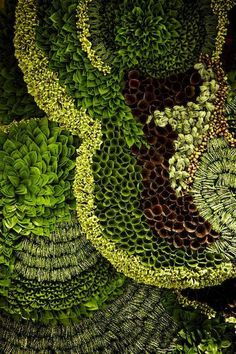 Botanical Walls by Japanese Artist Makoto Azuma