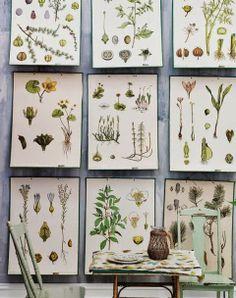 Botanical prints for decor