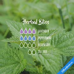 Herbal Bliss - Essential Oil Diffuser Blend