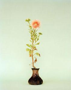 Diana Scherer, Photography - 'Nurture Studies'