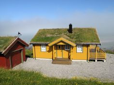 Yellow, green and red. (Lofoten, Norway)