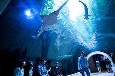 Dallas Texas Aquarium #TheCrazyCities #crazyDallas