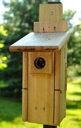 Build A Bird House With These Free Plans!