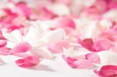 imagenes  | Imagen: Petalos de rosas - (1600x1067)