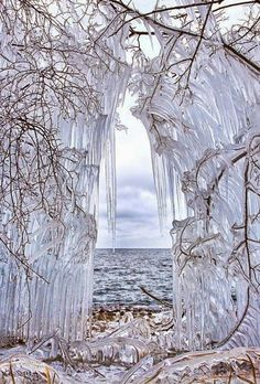 Frozen trees at lake Baikal, Siberia, Russia