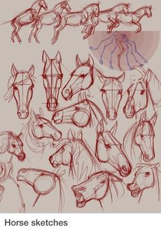 Pferdchhen zeichnen Best Picture For anime dessin tuto For Your Taste You are looking for something, Horse Drawings, Animal Drawings, Art Drawings, Horse Face Drawing, Pencil Drawings, Animal Sketches, Drawing Sketches, Drawing Tips, Drawing Ideas
