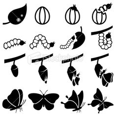 Cocoon to Butterfly Transformation black and white icon set Royalty Free Stock Vector Art Illustration