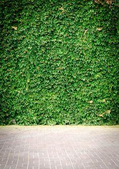 Beautiful Pathfinder Living Wall