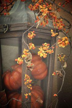 Autumn Colors Pumpkin and Orange