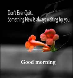 Morning Wishes For Her, Good Morning Wishes Quotes, Good Morning Dear Friend, Good Morning Msg, Good Morning Cards, Good Day Quotes, Good Morning Greetings, Good Morning Friends Images, Morning Post